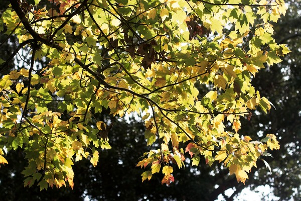 07spring-sunshine