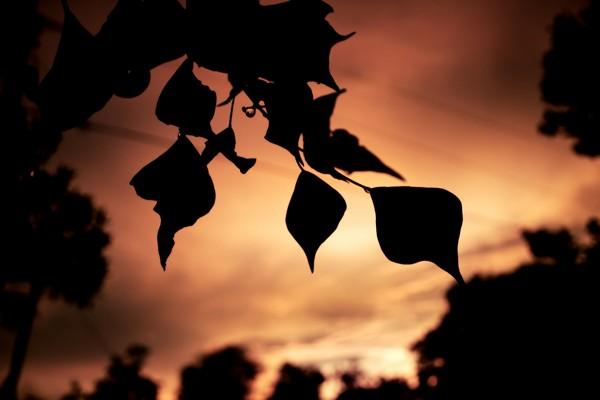 14leafy-sunset-6