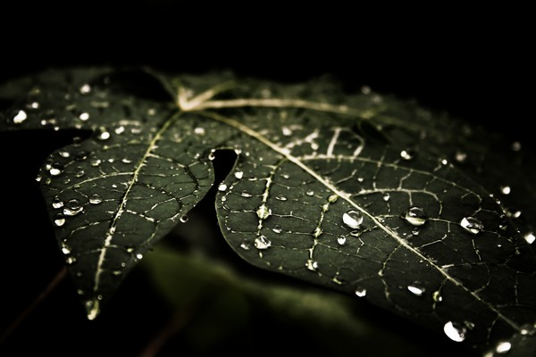 17leafy-droplets-4