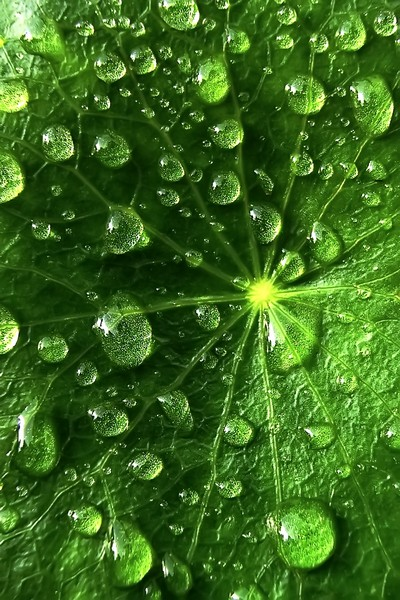 18leafy-droplets