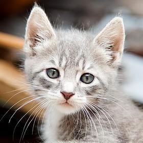 Kittens 2014-05-31