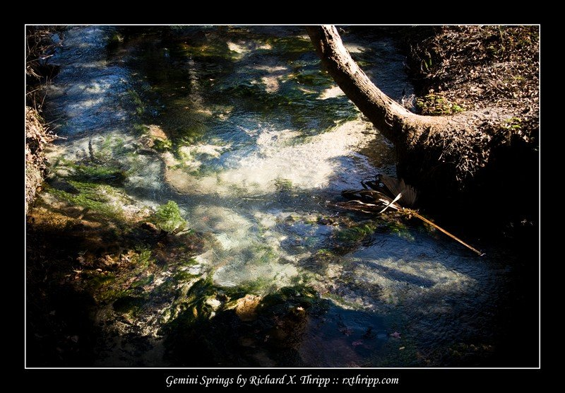 Gemini Springs