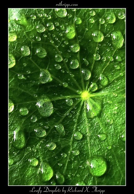 Leafy Droplets