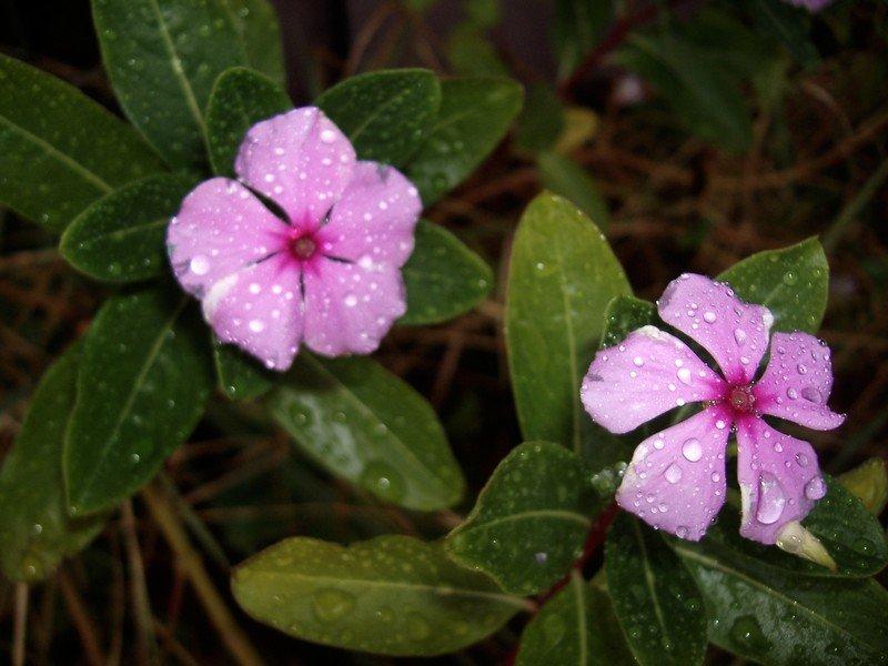 Sexy Flowers