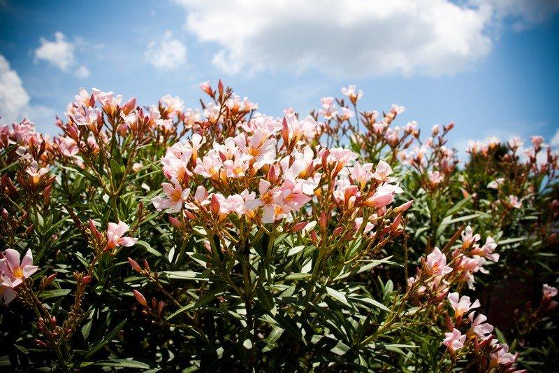 Sunny White Flowers