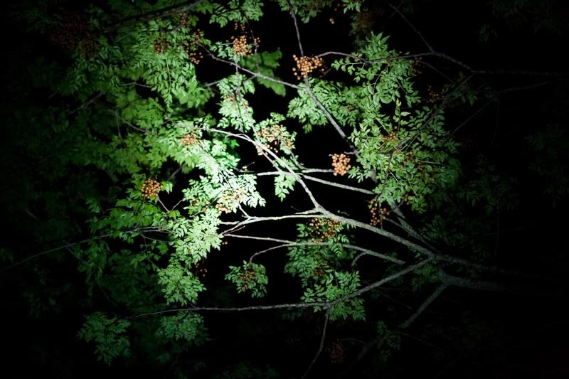 Green Leaves at Night