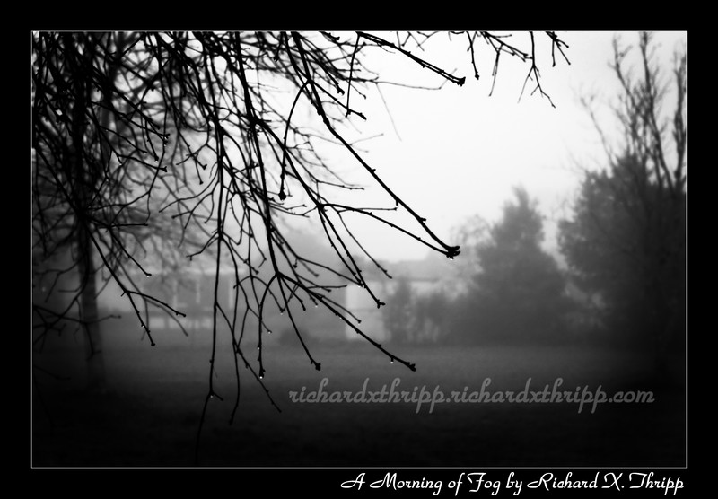 A Morning of Fog — foggy tree branches