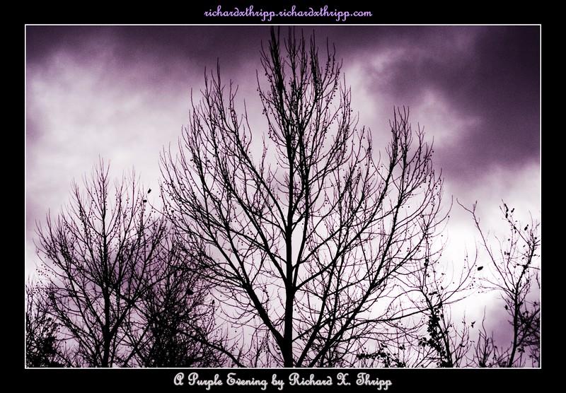 A Purple Evening — barren trees against a darkening purple sky