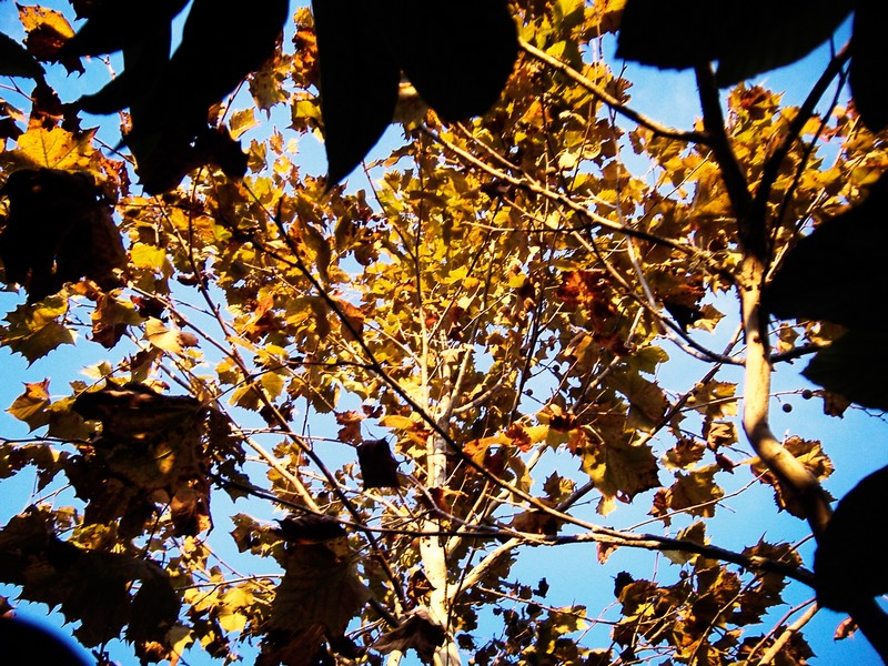 Photo: Autumn Leaves 2