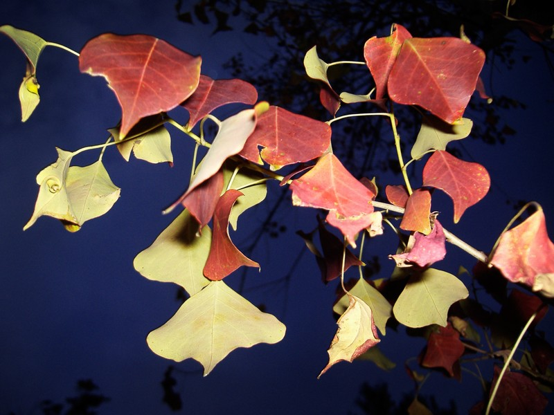 Photo: Autumn Leaves: Flash