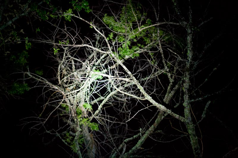 Photo: Barren Branches