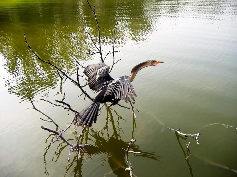 Photo: Bird