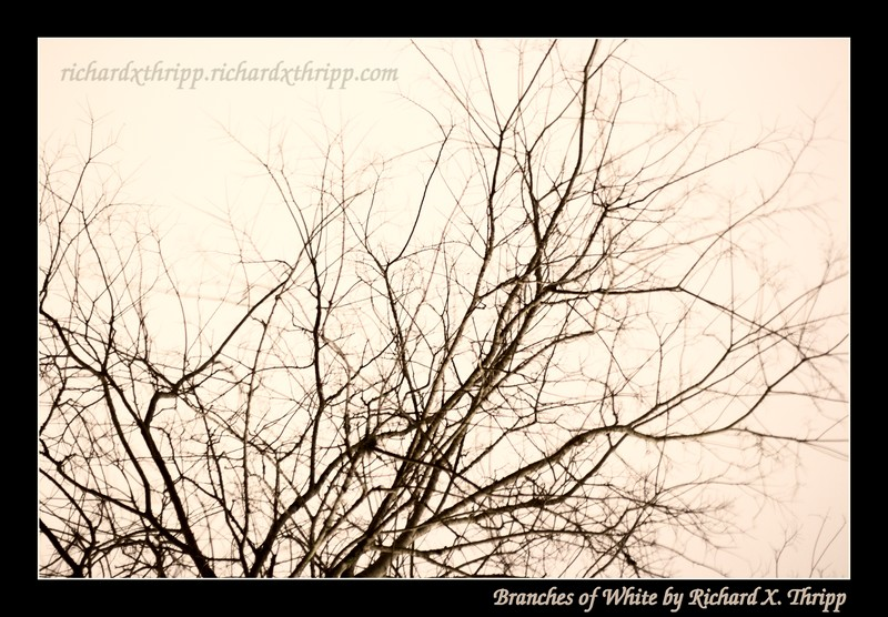 Branches of White — a barren tree against a windy white sky