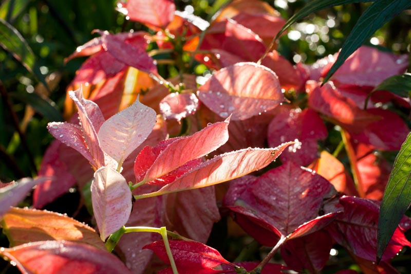 Photo: Bright Leaves and Sunshine