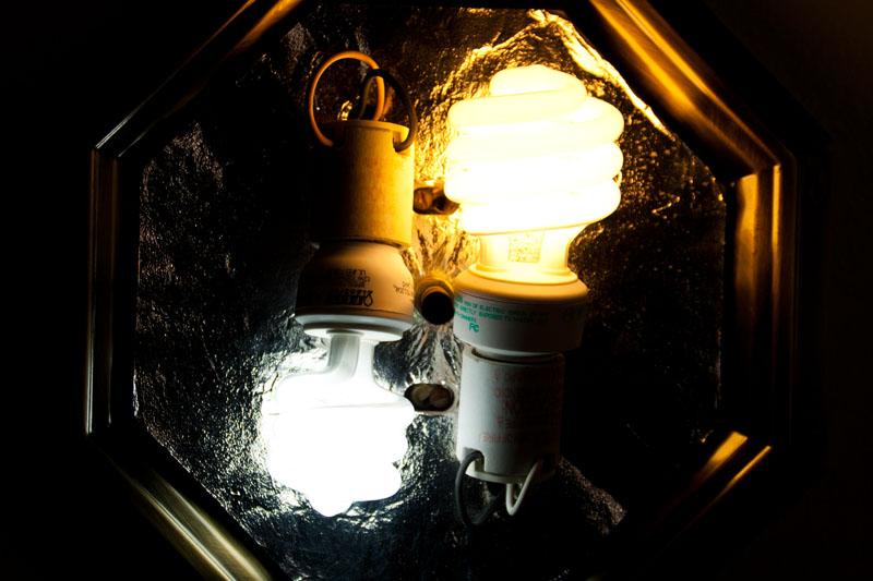 Photo: CFLs