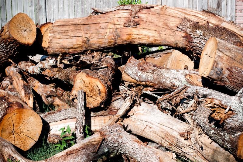 Photo: Dead Trees
