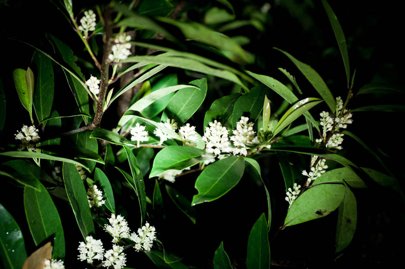 Photo: Flowering Shrub