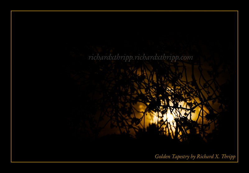 Golden Tapestry — a golden sun behind silhouetted branches