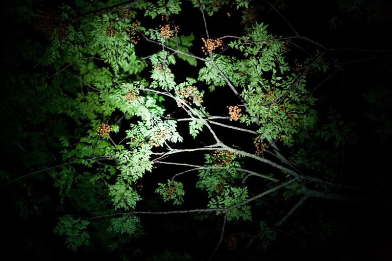 Photo: Green Leaves at Night