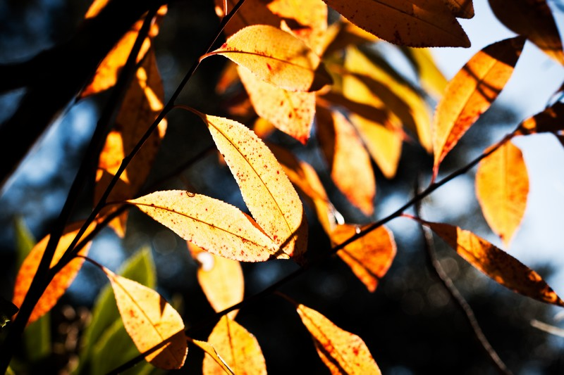 Photo: Leaf Sunshine