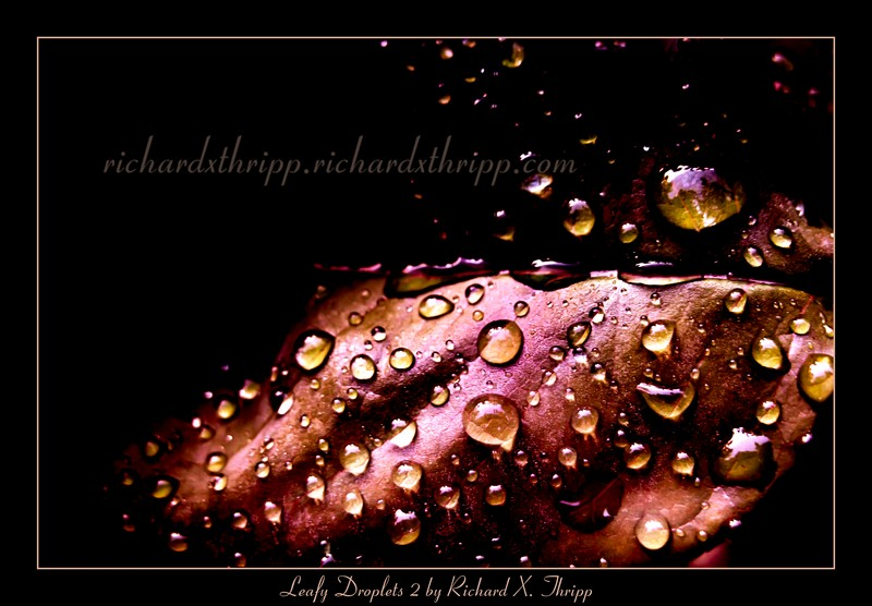 Leafy Droplets 2 — a dark orange leaf with raindrops