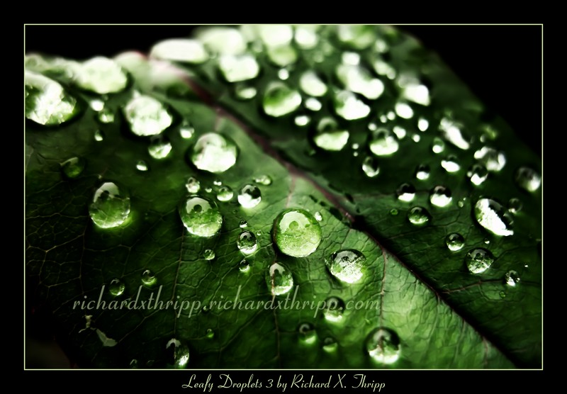 Leafy Droplets 3 — drops of water on a vivid green leaf