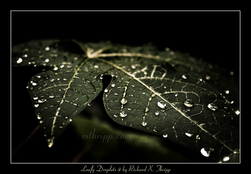 Leafy Droplets 4 — a green leaf with dark raindrops