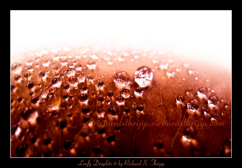 Leafy Droplets 6 — liquid drops on an colorful orange leaf