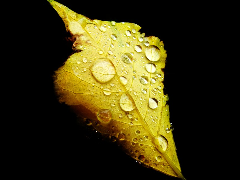 Photo: Leafy Droplets 7