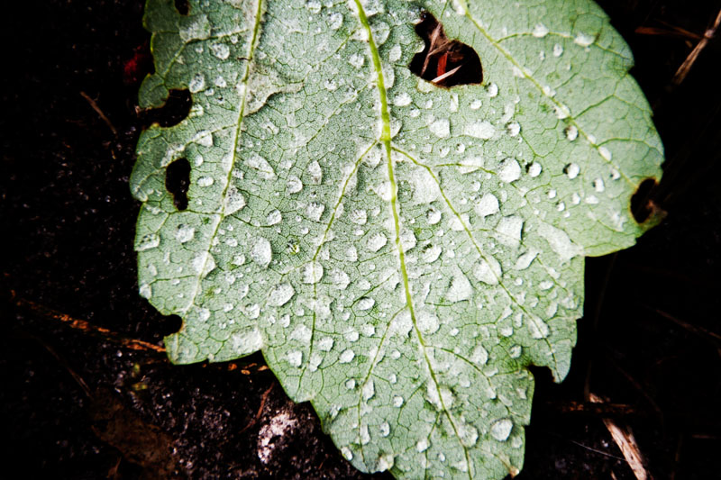 Photo: Leafy Droplets 8
