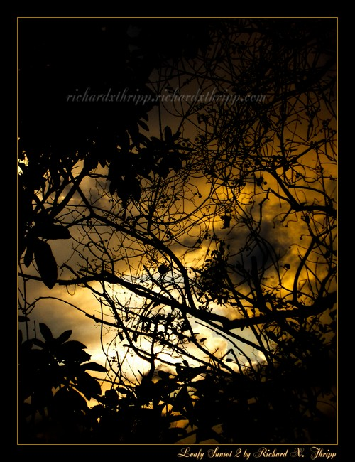 Leafy Sunset 2 — yellow sunset of leaves and vines