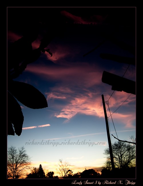 Leafy Sunset 3 — a dark blue and pink sunset with silhouetted leaves and branches