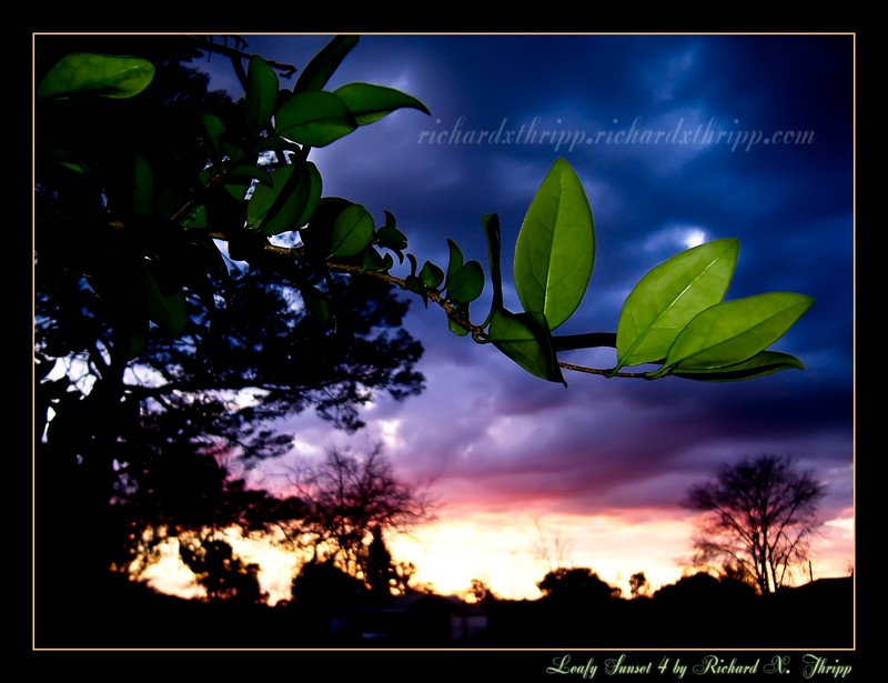 Leafy Sunset 4 — green leaves on a sunset of purple and yellow