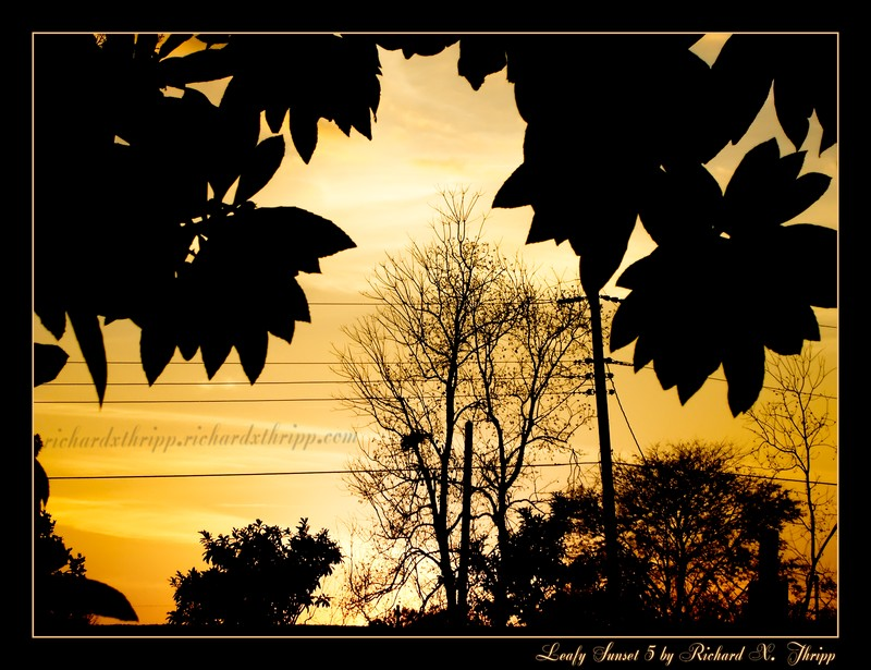 Leafy Sunset 5 — a terminal orange sky framed by pointy leaves