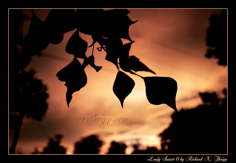Leafy Sunset 6 — silhouetted leaves and an orange evening sky