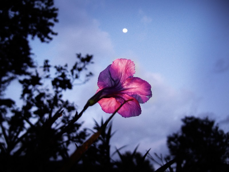 Photo: Moonlight