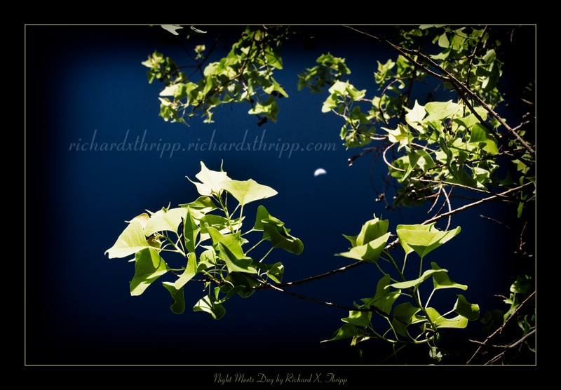 Night Meets Day — sunlit leaves against a moonlit sky