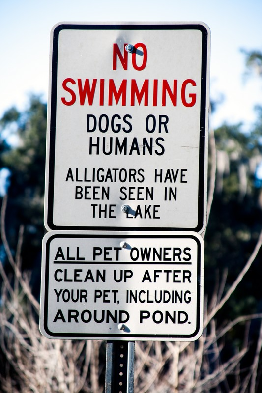 Photo: No Swimming: Dogs or Humans
