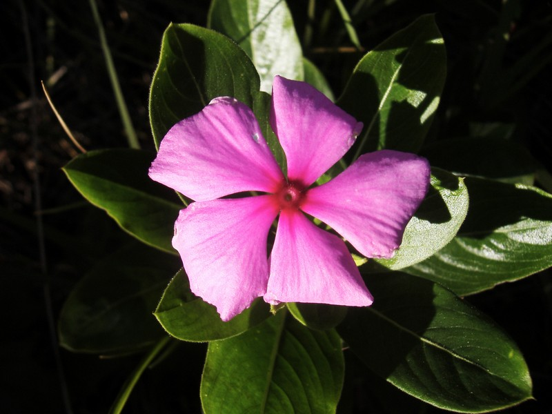 Photo: Pink Flower