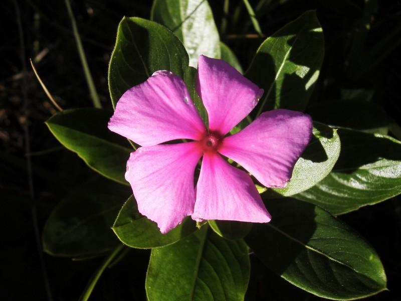 Photo: Pink Flower