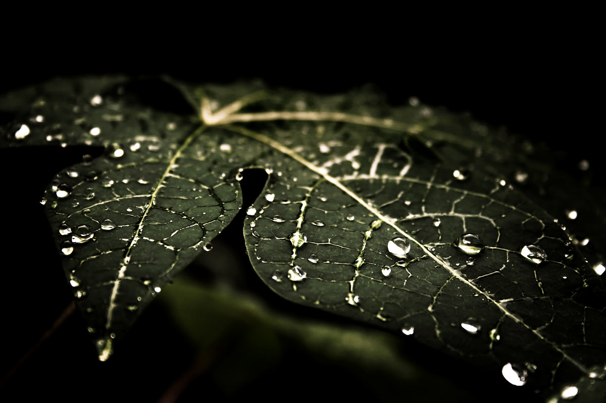 Leafy Droplets 4