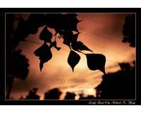 Leafy Sunset 6