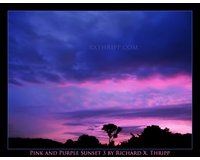 Pink and Purple Sunset 3
