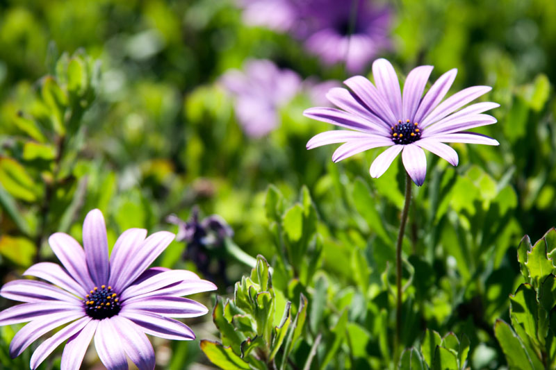 Photo: Purple Petals