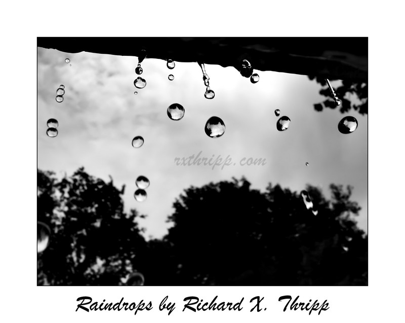Raindrops — drops of rain in beautiful black and white