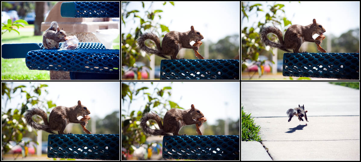 Photo: Squirrel Story