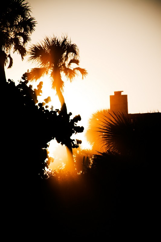 Photo: Sunburst