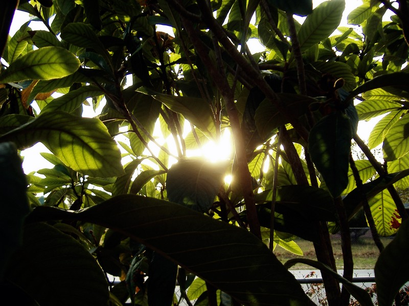 Photo: Sunshine 7: Through the Leaves