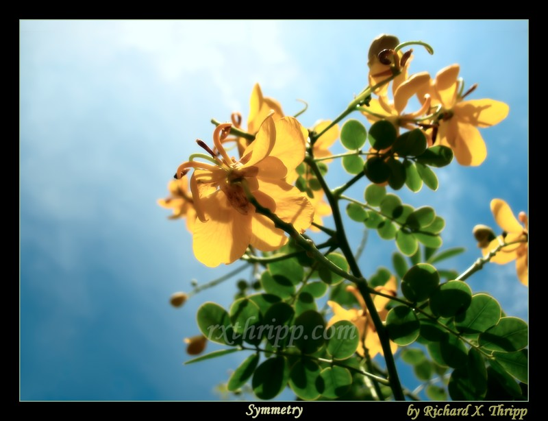 Symmetry — a yellow, sunlit flower against a deep blue sky