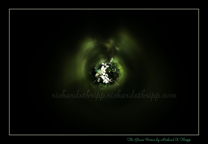 The Green Vortex — green leaves through a pinhole